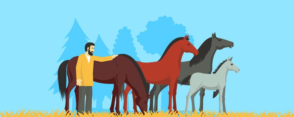 The Domestication Of Horses
